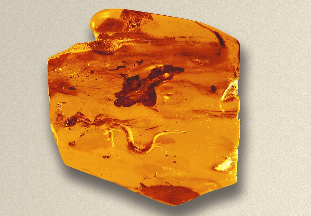 When, how and where can amber be collected?